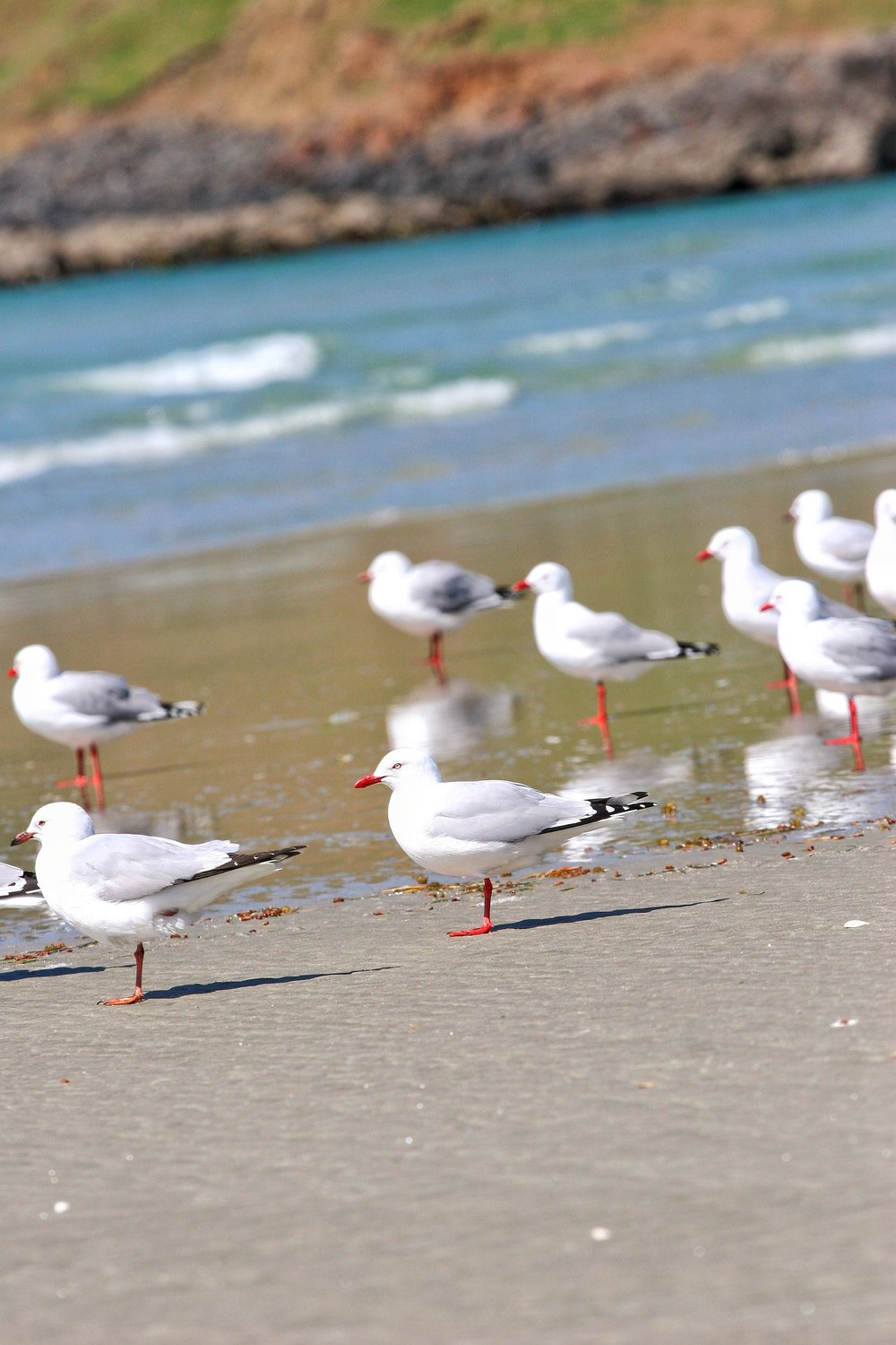 Victory Beach is a great spot for wildlife viewing on the Otago Peninsula