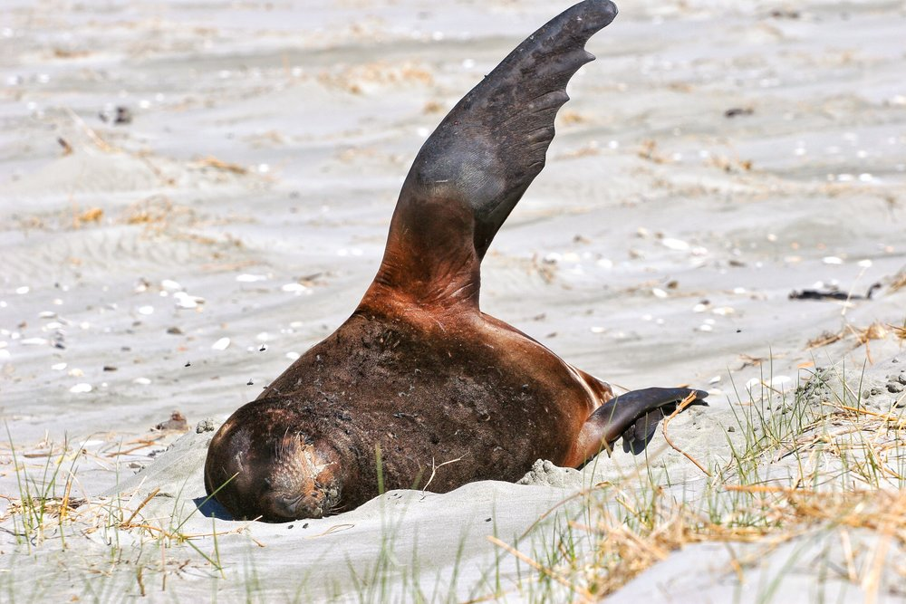 Victory Beach is quite popular with Sea Lions, whom should be given a wide berth.