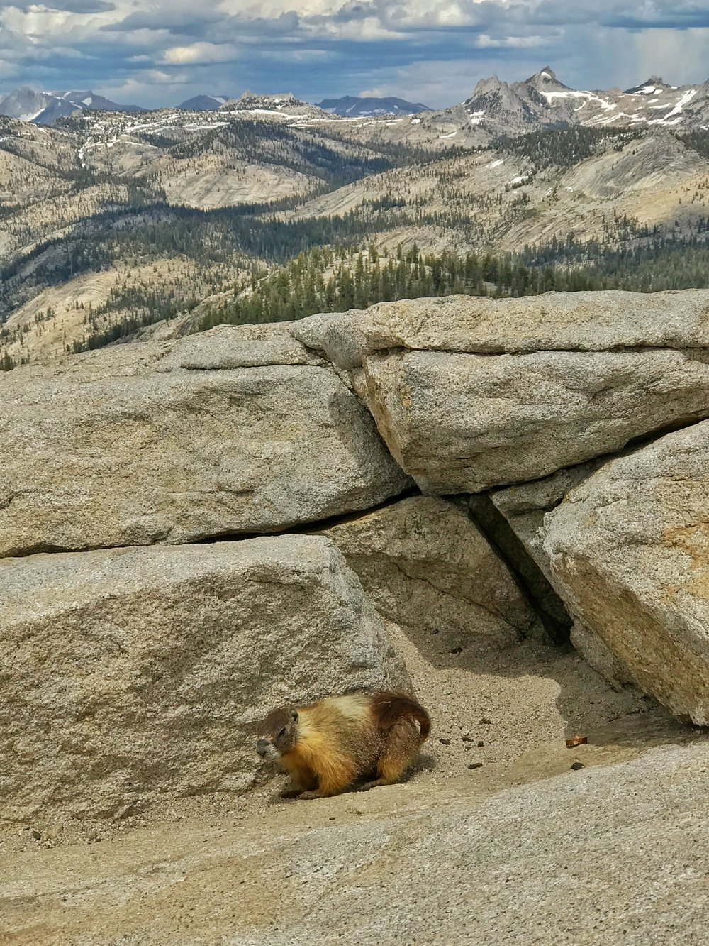 This peak is a good spot to see marmots, who thrive at higher elevations.