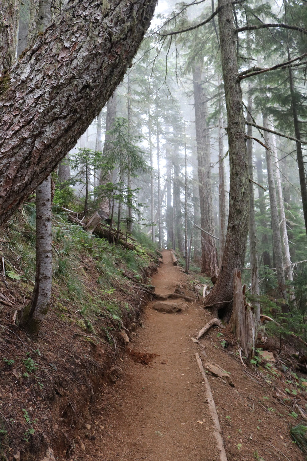 For the first third of a mile, the trail ascends through forested switchbacks.