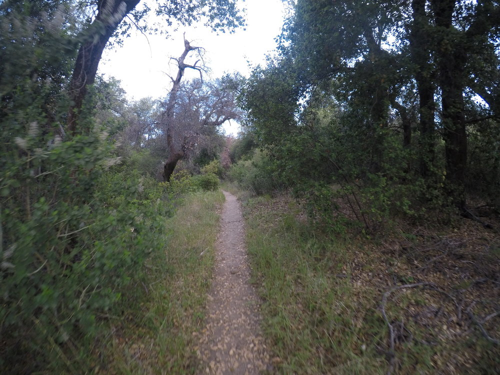 Once past the oaks, the Espinosa Trail also provides some great single track scenery.