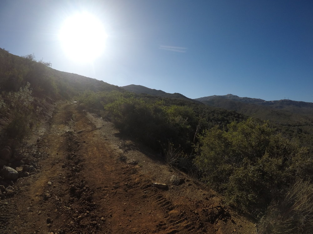 The trail to Lawson Peak starts on the old Carveacre Road, and follows it for quite a period of time.