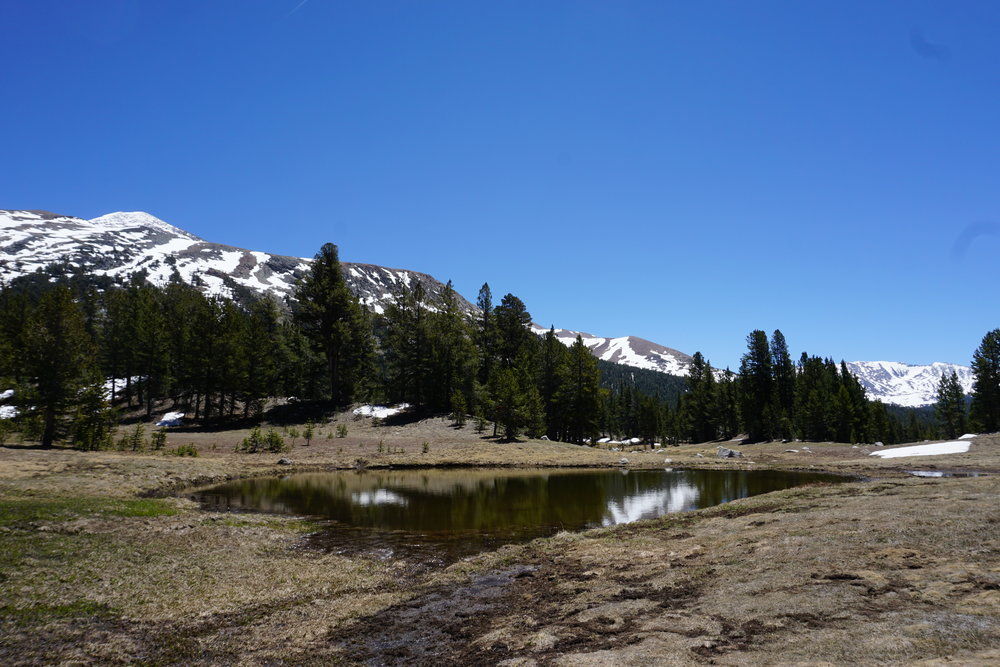 Even though there is no maintained trail, the route up Mount Dana is accessible to all adventurous hikers.