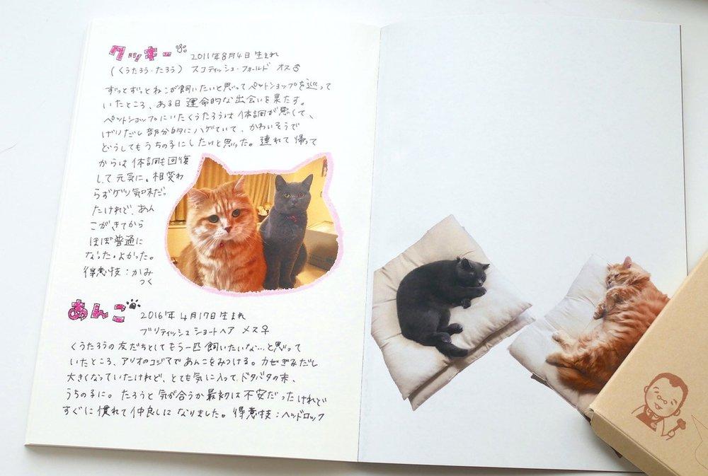 Image 9 Cats.jpg