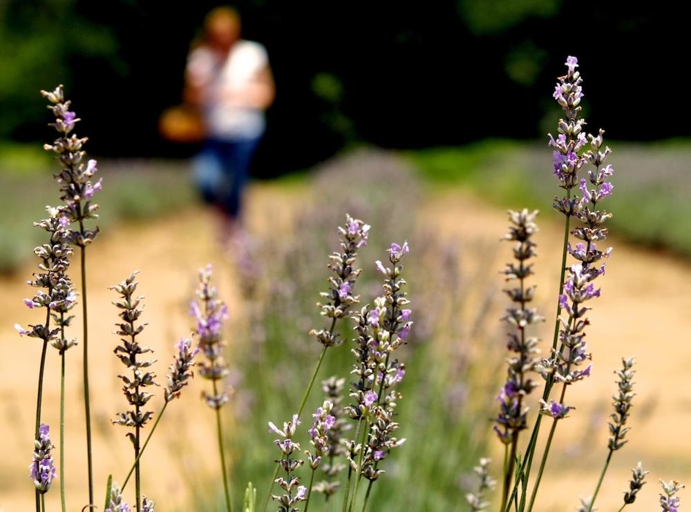 nature_09.jpg