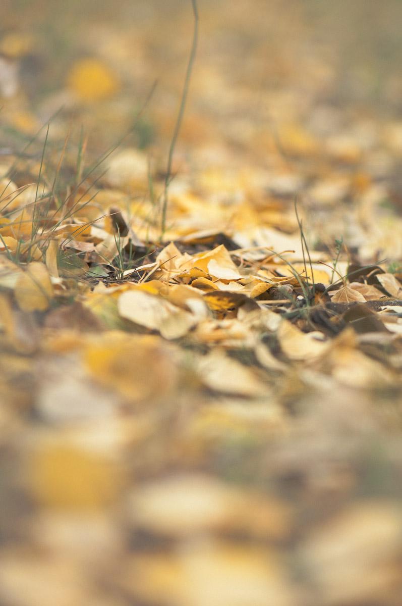 liefdephoto--20120923-11.jpg