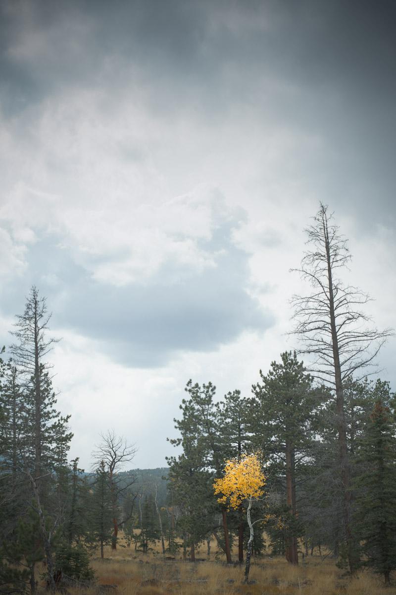 liefdephoto--20120923-8.jpg