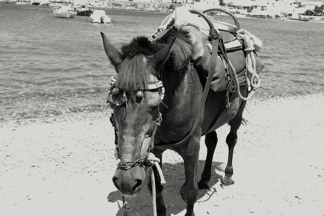 Braylakis, Mykonos' finest, is feeling very left out now Israeli compatriots are equipped with wifi. UPDATE: Readers tell me the beast in this picture is a horse! Just shows how much I know about animals, although I do know a thing or two about wifi. Better I stick to tech stuff in future.