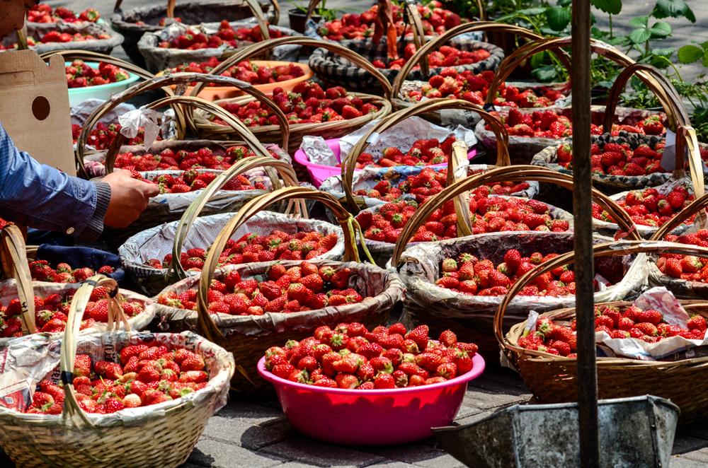 Strawberries in season