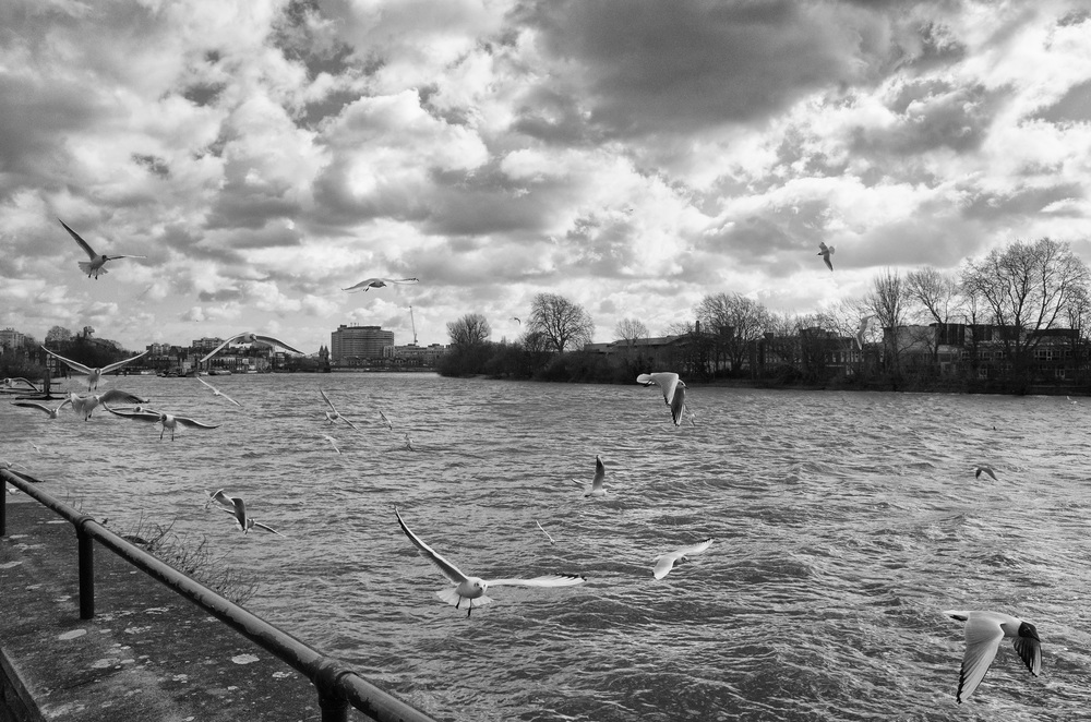 Seagulls at Hammersmith. f/8 @ 1/2500s, ISO 1000