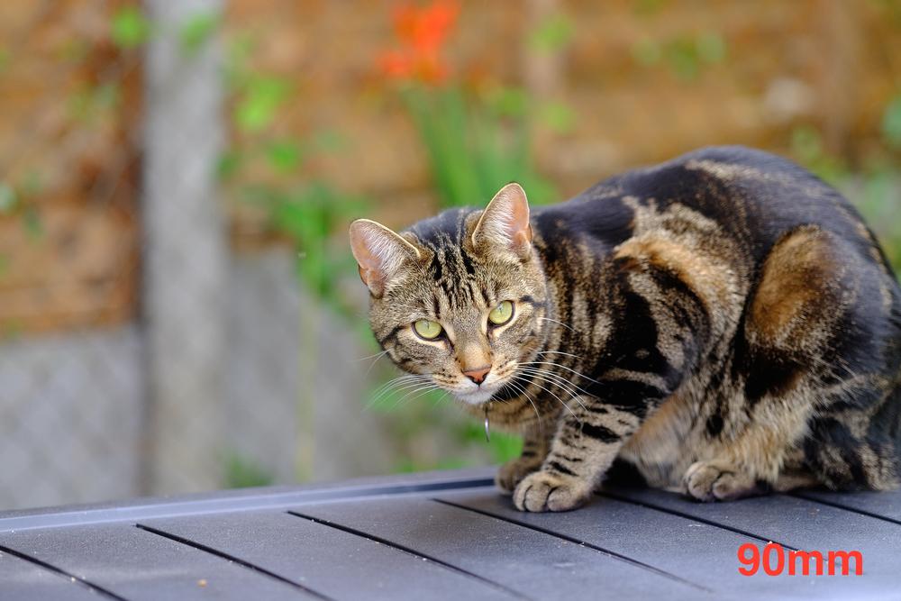 Barnack the cat Fuji 90mm 1.jpg