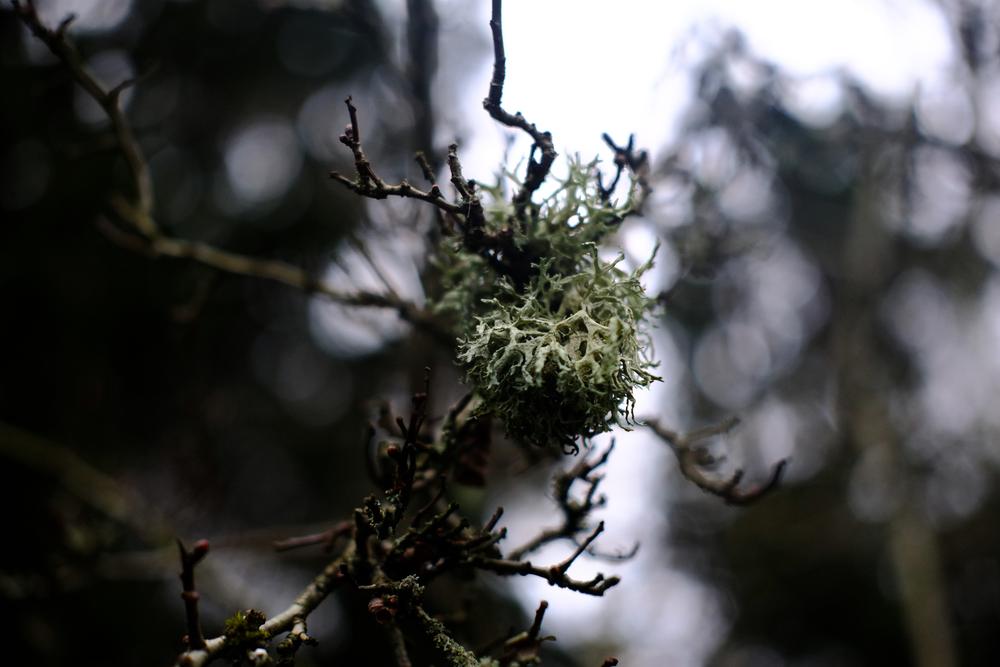 Tree Moss,35mm