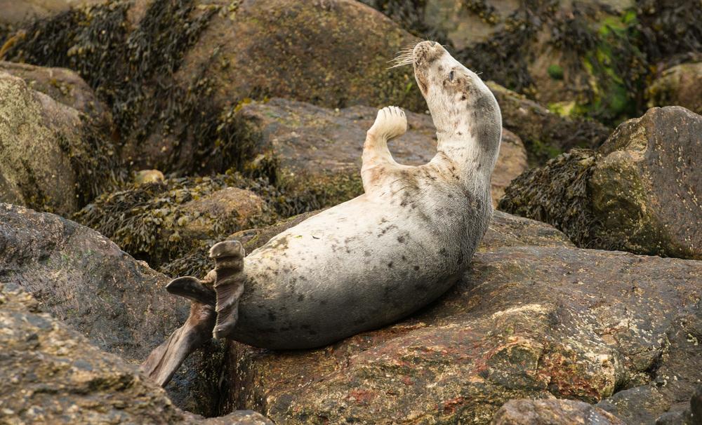 Photo 16: Stranded Seal, Keem Achill