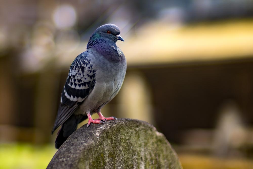 Cropped birdie