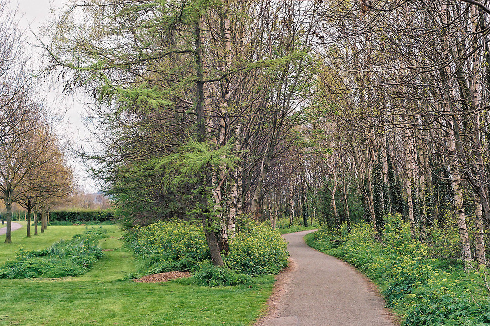 Woodland path taken with the M5 and 50mm Summarit. All photographs in this article by William Fagan