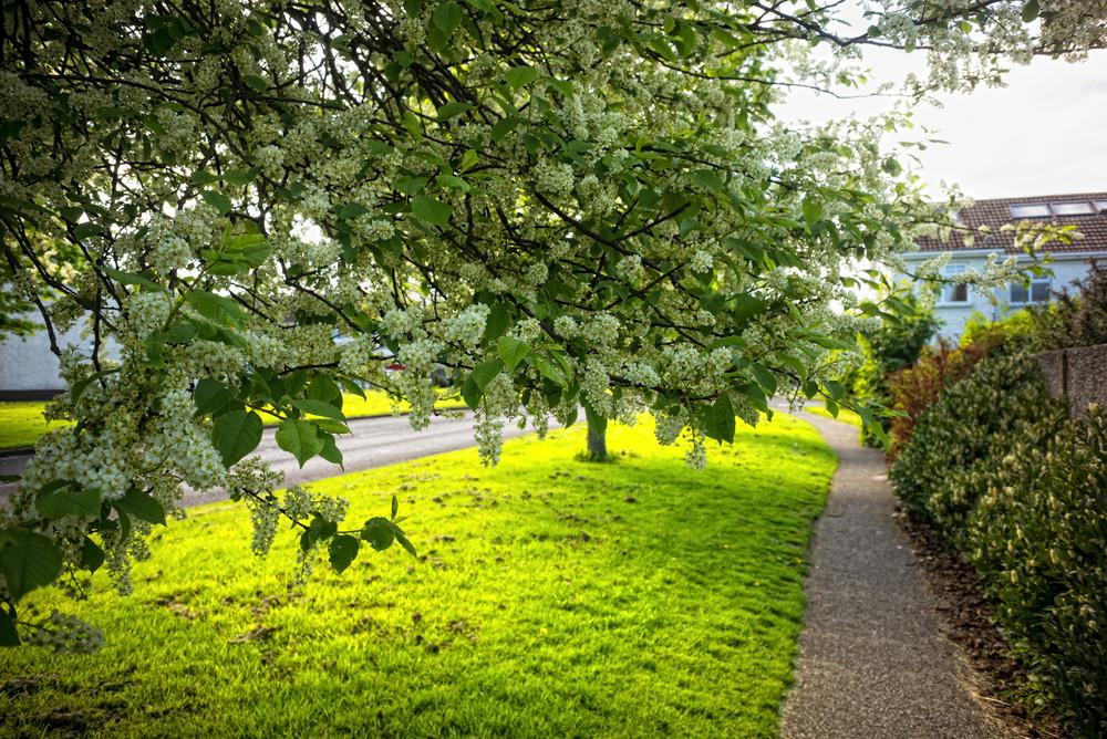 Tymon May 2016 1 Flowers on Tree (1 of 1).jpg