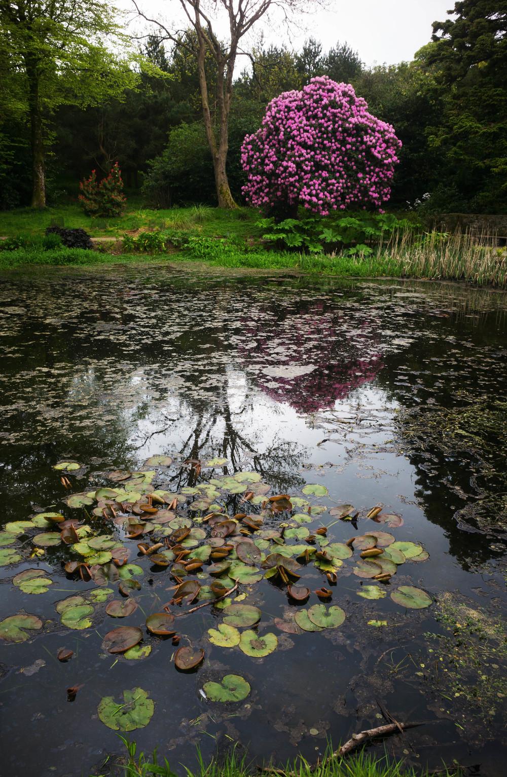 Kilmacurragh Arboretum, May 2016