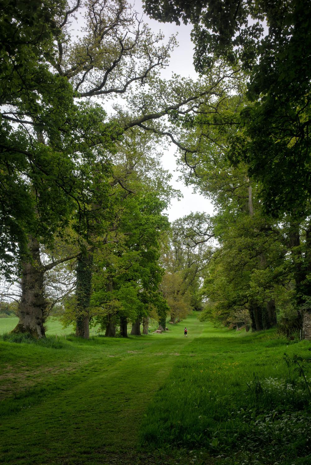 Kilmacurragh Arboretum May 2016 6 Tree Avenue 1 (1 of 1).jpg