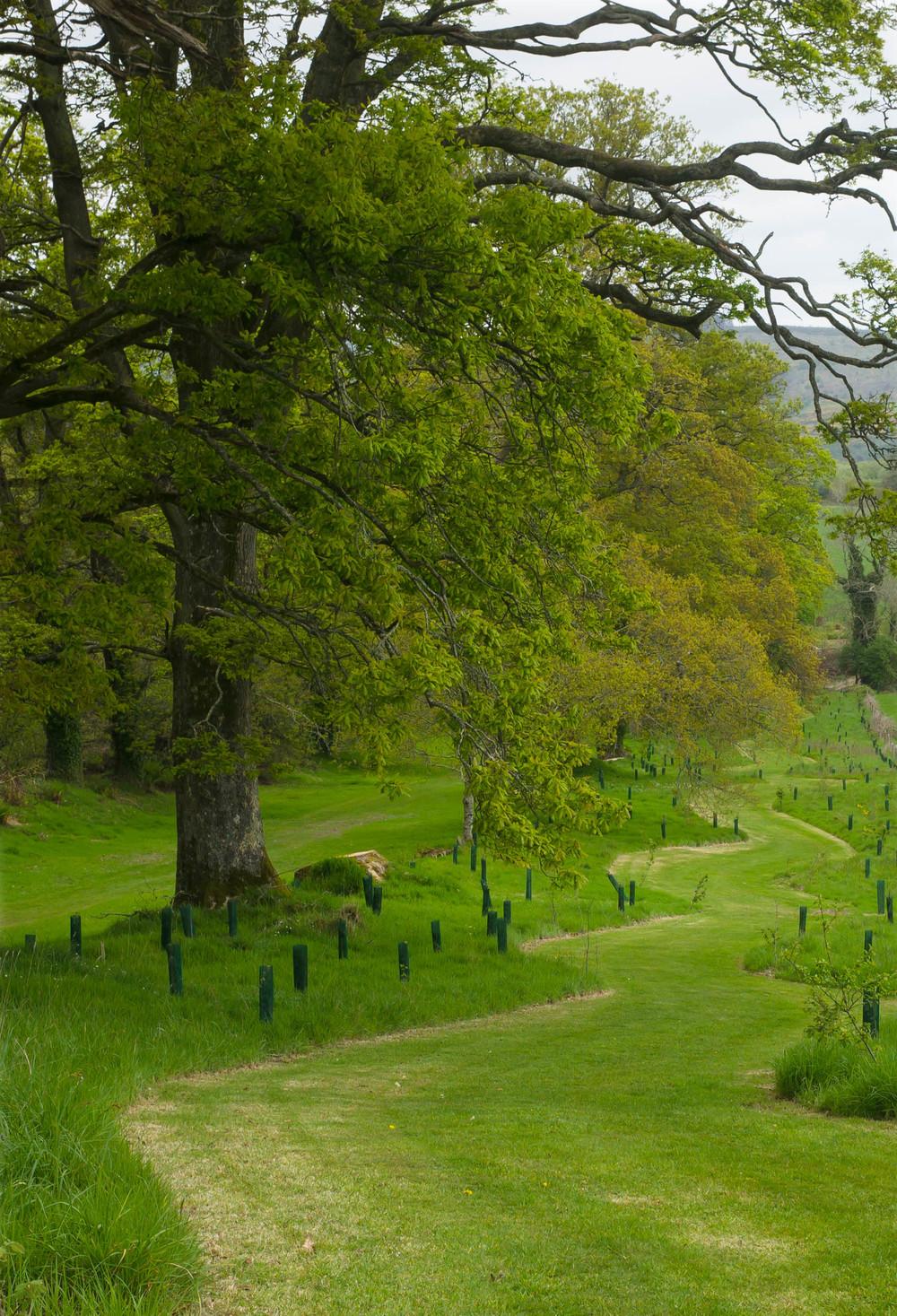 Kilmacurragh Arboretum May 2016 7 Tree Avenue 2 (1 of 1).jpg