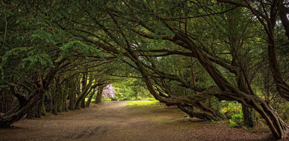 Kilmacurragh Arboretum May 2016 9 Leaning Tree Avenue  (1 of 1).jpg