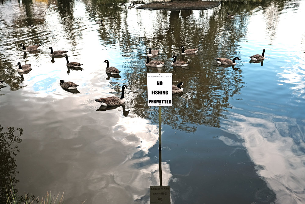 Nobody told the geese....