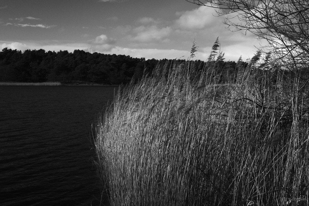 Acros does landscape
