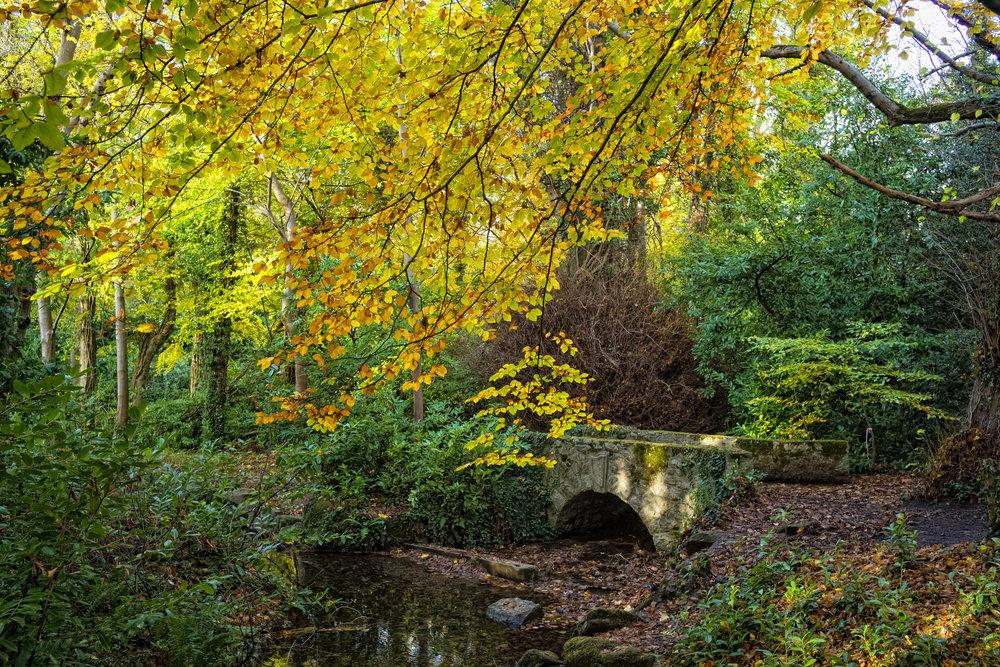 1 Marlay Park November 2017 Autumn 20-.jpg