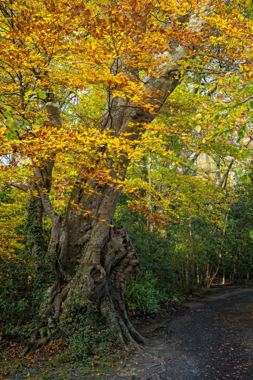 3 Marlay Park November 2017 Autumn 4-.jpg