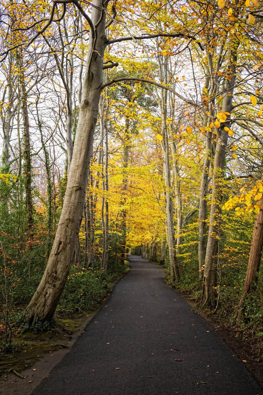 4 Marlay Park November 2017 Autumn 5-.jpg