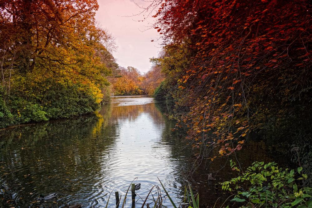 9 Marlay Park November 2017 Autumn 14-.jpg