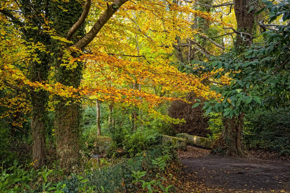 11 Marlay Park November 2017 Autumn 7-.jpg