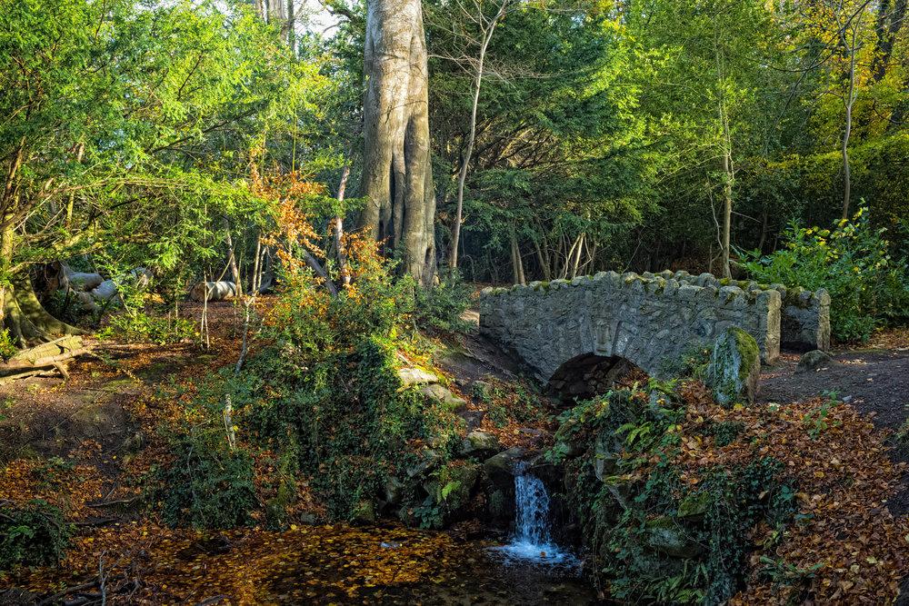 12 Marlay Park November 2017 Autumn 10-.jpg