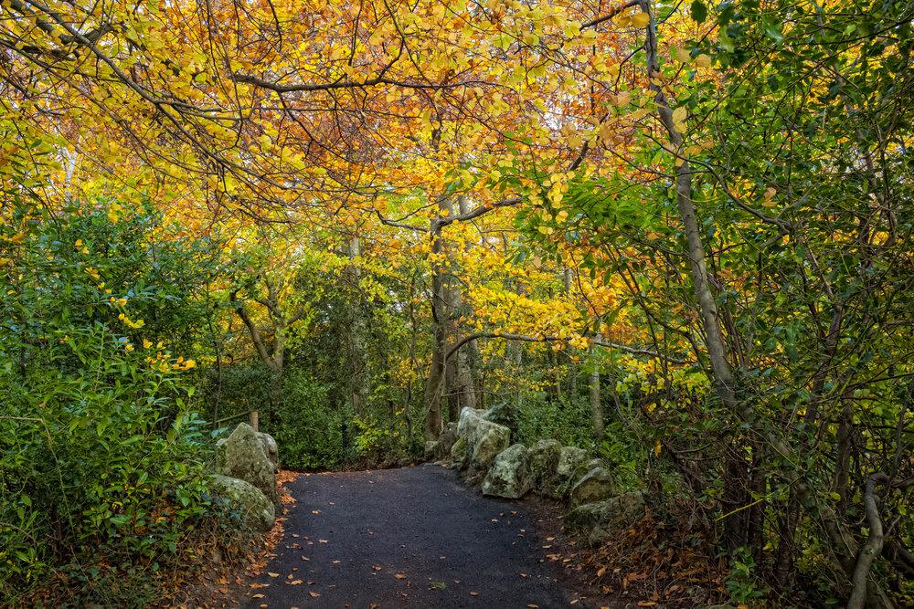 14 Marlay Park November 2017 Autumn 19-.jpg