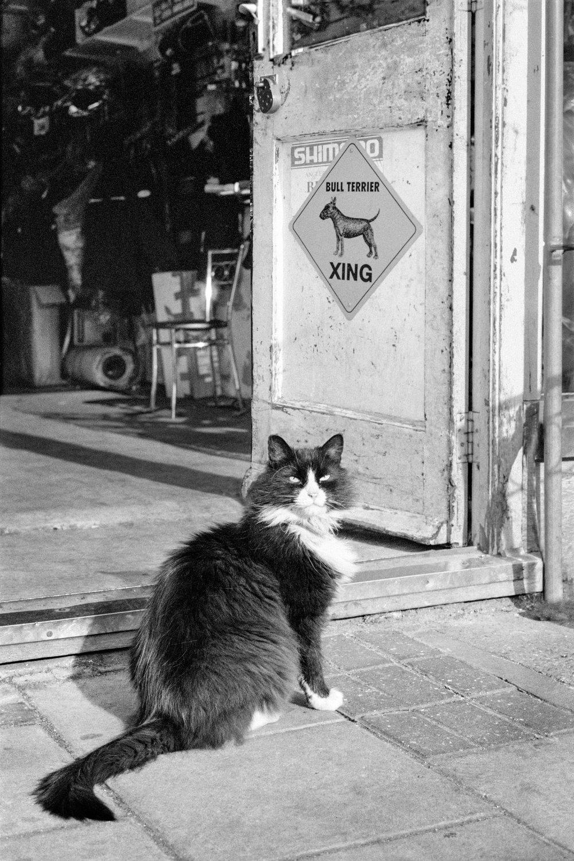 RA024.Sylvester the cat.jpg