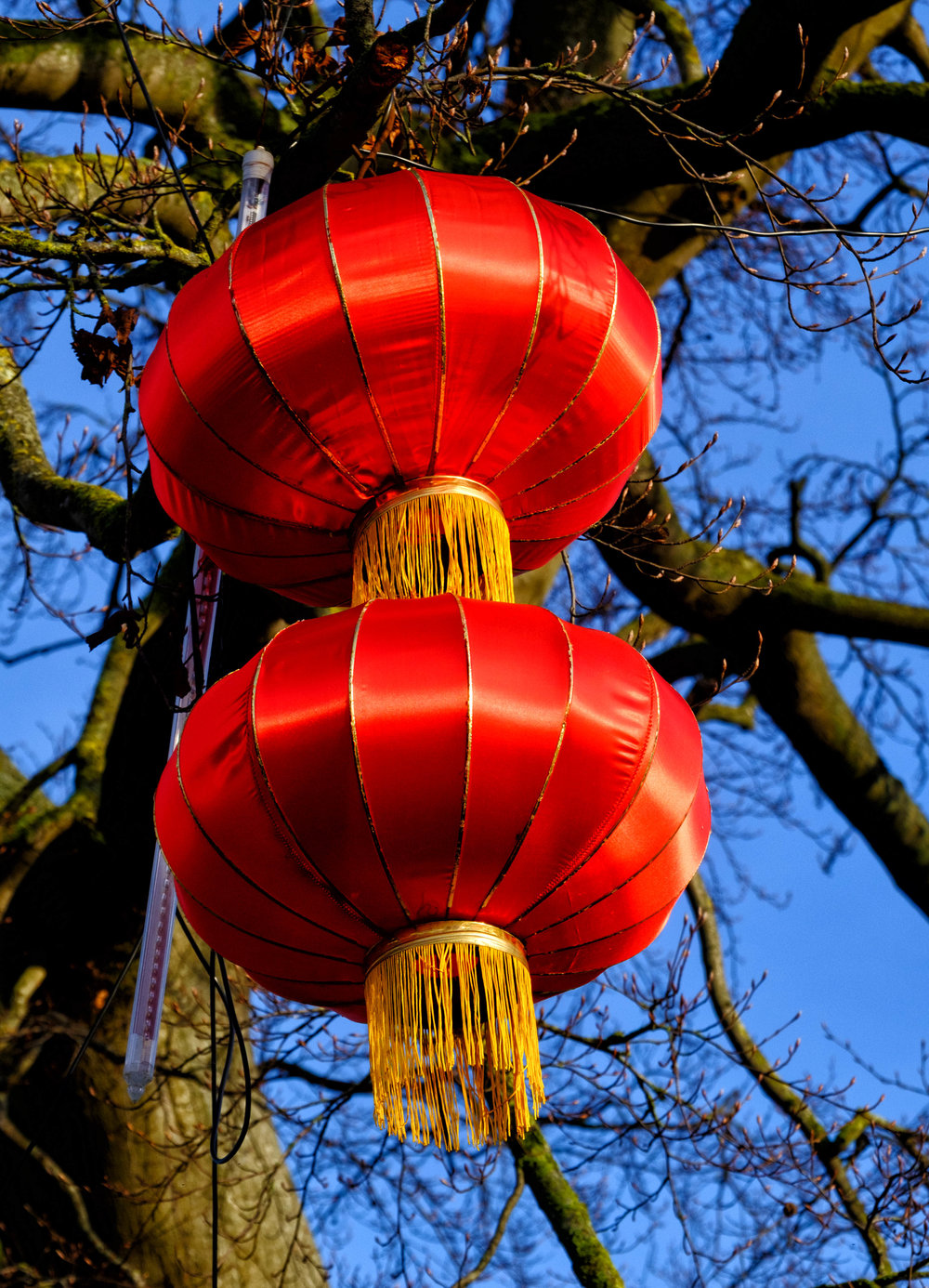 4 January 2018 Dublin Zoo Chinese Lanterns 4-.jpg