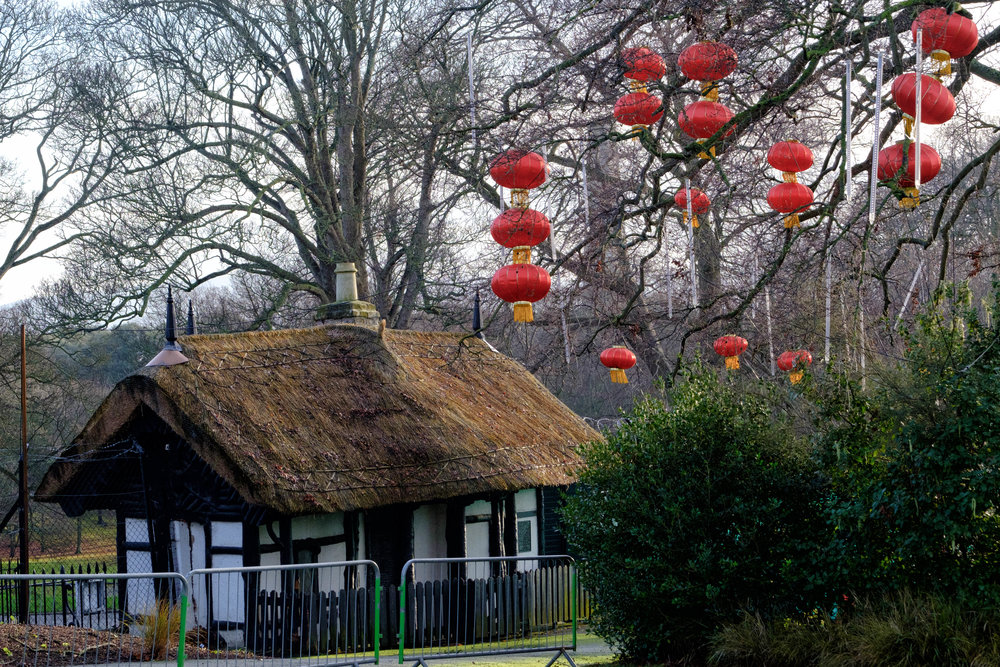 36 January 2018 Dublin Zoo Chinese Lanterns 6-.jpg