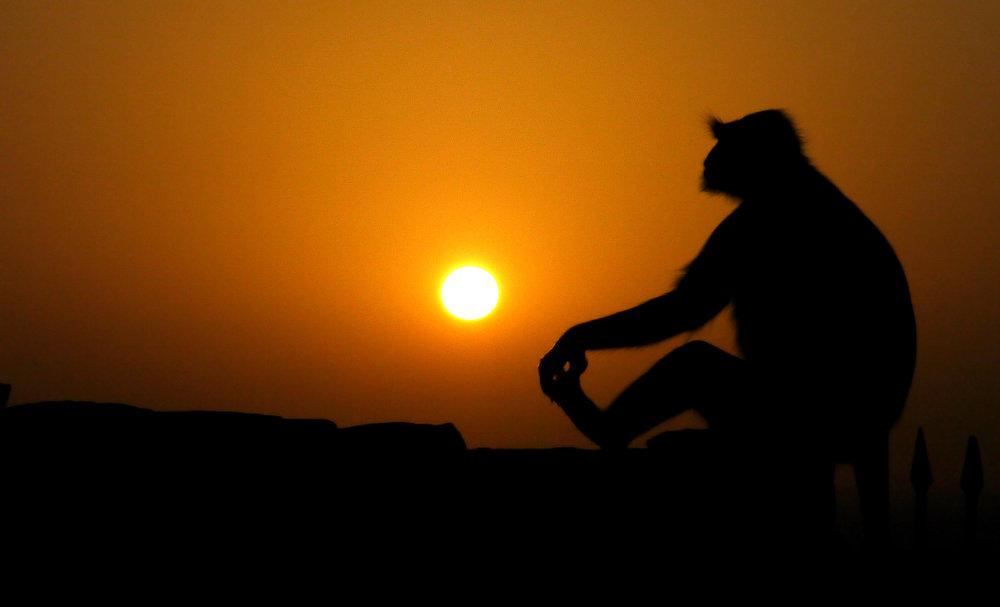 10 Going East POW Monkey Sunset at Chittaurgarh.jpg