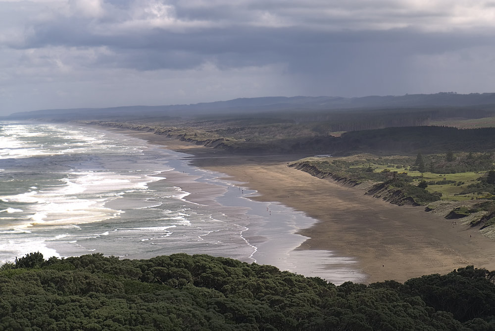 Muriwai Beach from the cliffs