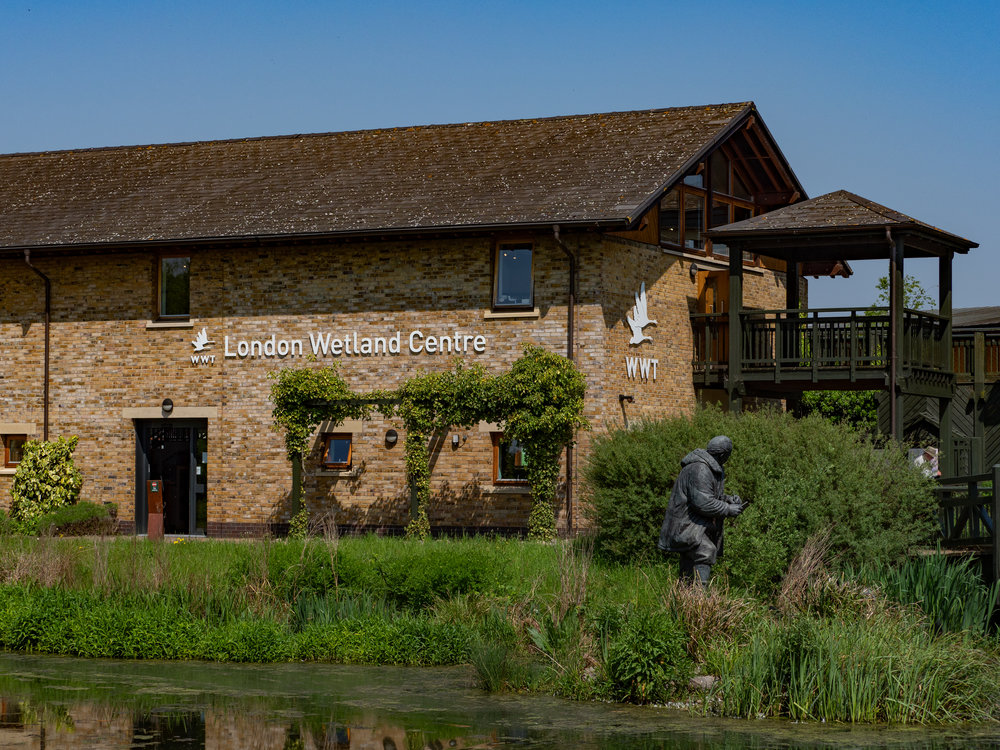 Only five miles from Piccadilly Circus, the London Wetland Centre is an oasis of peace, feathers and obliging wildlife. On a busy day it is infested with twitchers, gathered in the various hides scattered around the vast area