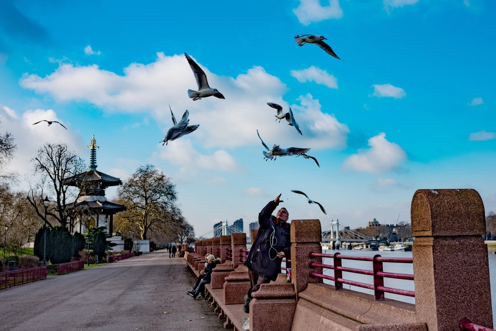 Feeding the birds, Leica M10