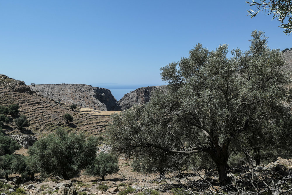 Olive trees and Ancient Terraces above Livaniana (ISO 125 1/1000th f5.6 27mm Leica C-Lux)