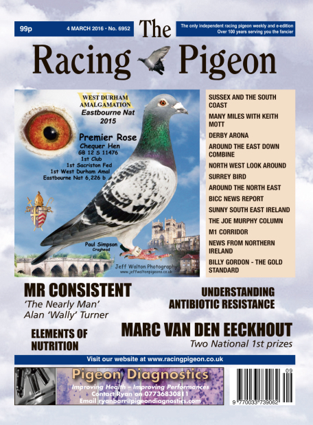 Racing Pigeon.jpg