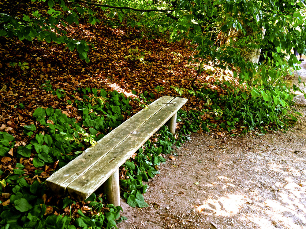 Empty bench, dead leaves