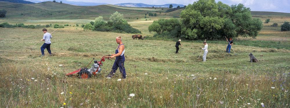 Haymaking on land near Szekelyderz Transylvania Romania. 2003. Hassleblad Xpan and 45mm lens