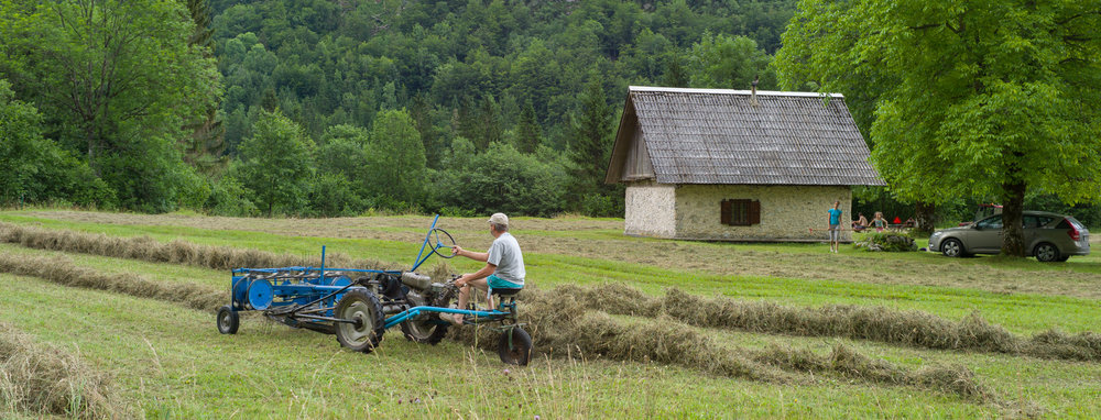 Turning hay in a traditional wildflower meadow after cutting, Voje valley Triglav National Park, Slovenia.
