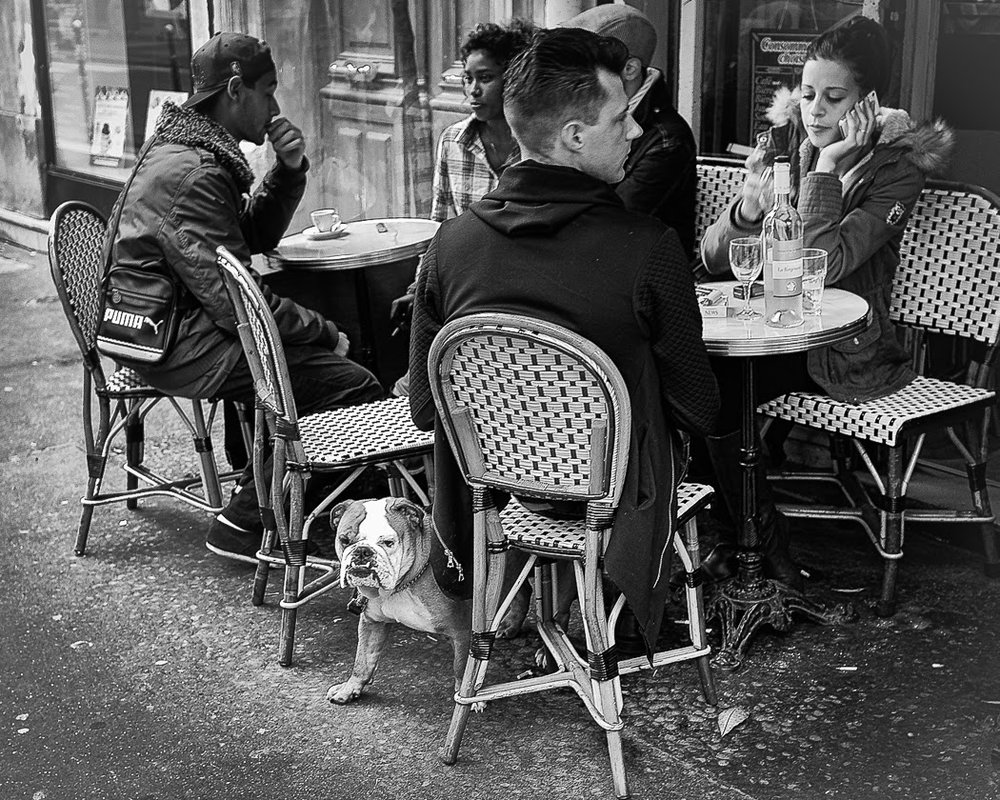 2016: Chiens de Paris, another superb insight from John Shingleton
