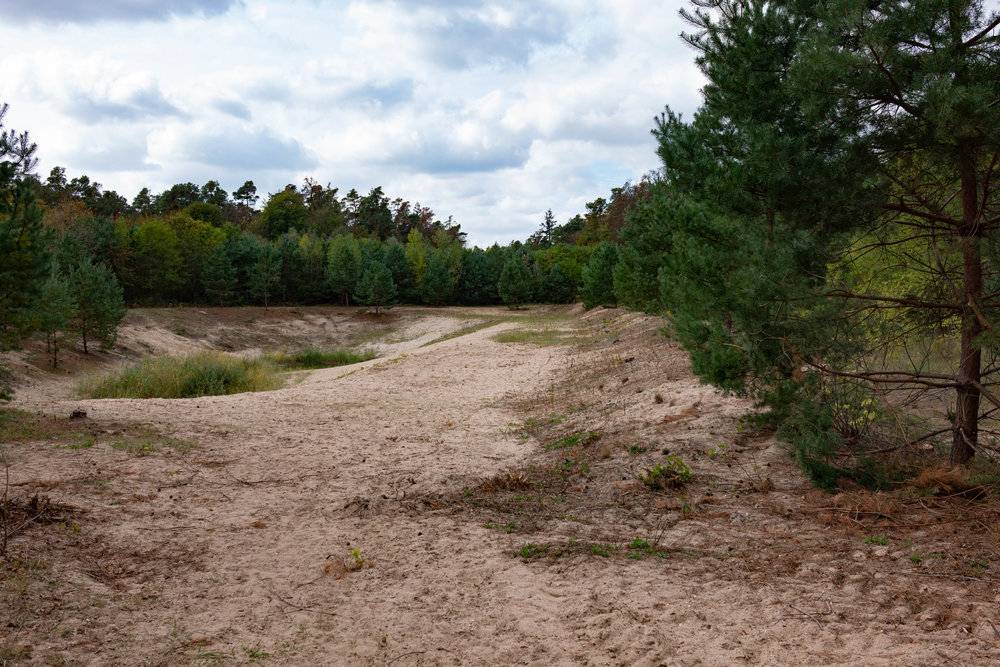 On the other side of the trees next to the river is this sandy clearing which was part of the old circuit and would have been where Clark's Lotus careered off into the trees and ended up against the river bank