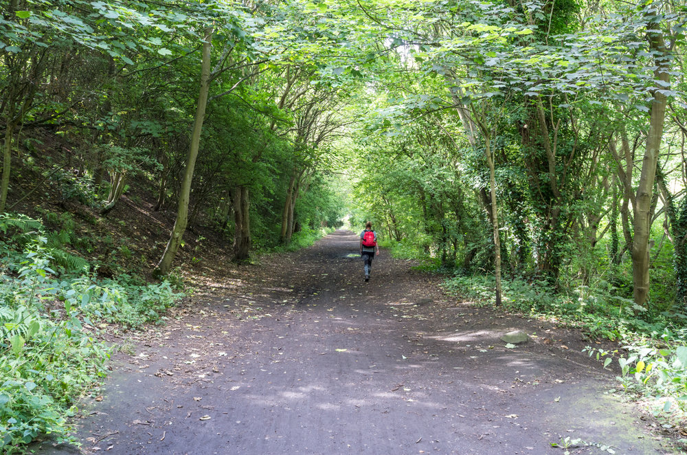 The tree lined track to Larpool Viaduct.