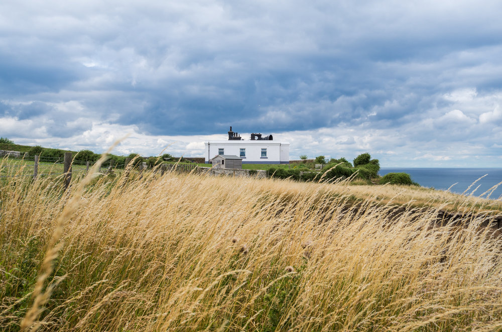 The Whitby Bull through the long grasses - Old Whitby Foghorn
