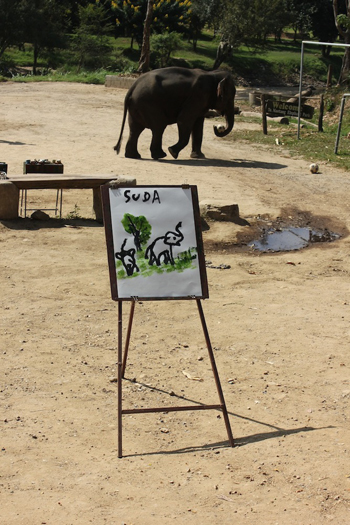 Elephant paintings!